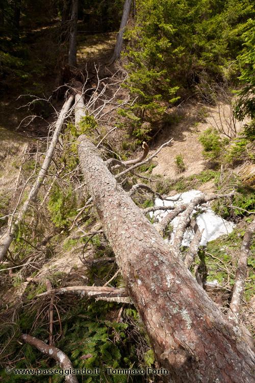 albero di traverso