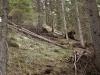 Tracce nel bosco