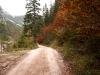 img_4600la-strada-nel-bosco