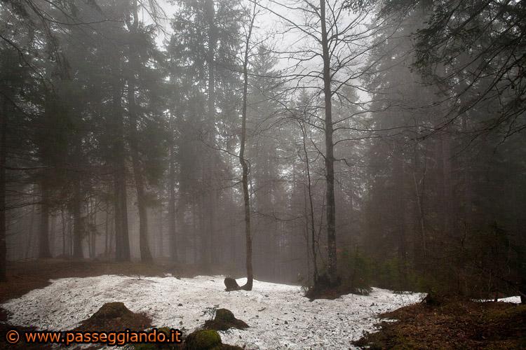 img_5895nel-bosco