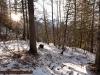 img_1837nel-bosco