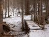 img_1840nel-bosco