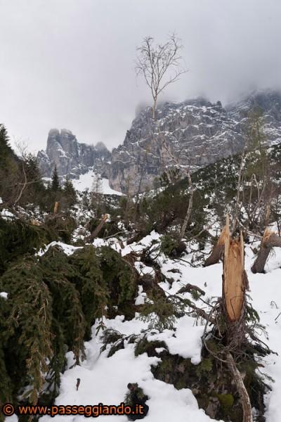 Gli alberi abbattuti